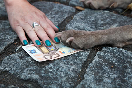 Hundehalterhaftpflicht günstig